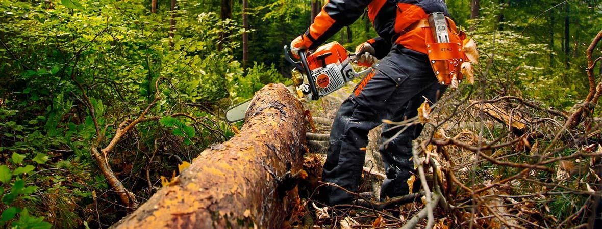 Poda y tala servicio de mantenimiento de rboles y palmeras for Como talar un arbol